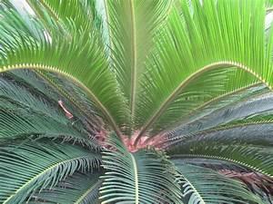 Poison in the GardenAmerican eBuilder