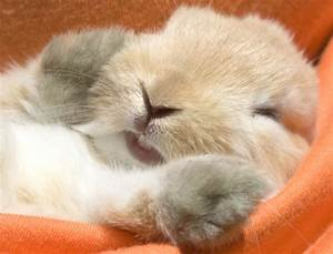 23 cute sleeping animals you'll just want to squeeze!