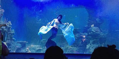 jakarta aquarium  jakarta tidak  punya seaworld