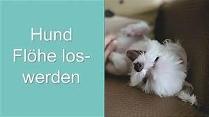 Flöhe Hund Mensch : hund fl he loswerden wie youtube ~ Yasmunasinghe.com Haus und Dekorationen