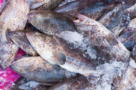 grouper fish uae spotted orange aquaculture case valuable popular