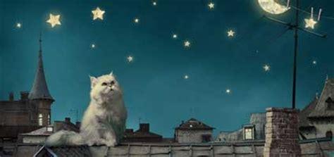 kitty horoscopes november belongs   mesmerizing
