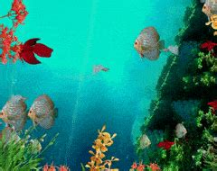 Coral Reef Animated Wallpaper - aquarium coral reef gifs search find make
