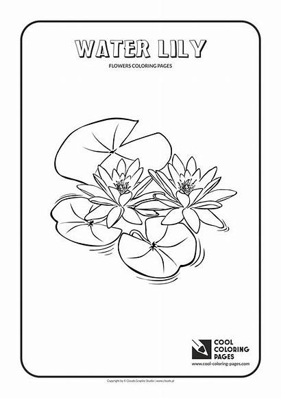 Coloring Water Lily Pages Cool Flowers Plants