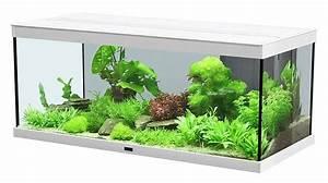Pflanzen Für Aquarium : aquarium licht pflanzen algen ~ Buech-reservation.com Haus und Dekorationen