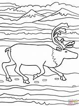 Elk Coloring Running Pages Printable Reindeer Finnish Forest Supercoloring Drawing Version Wapiti Categories Paper sketch template