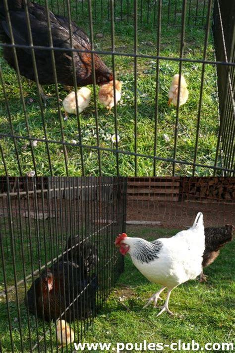 comment arreter une poule qui veut couver