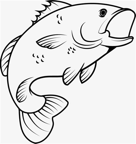fish drawing images