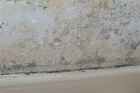 moisissure tapisserie chambre moisissure mur chambre finest traces de moisissures et de