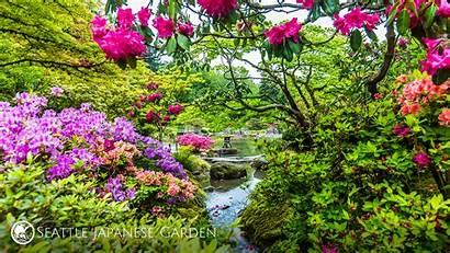 Backgrounds Garden Colorful Japanese Seattle Azaleas Conferences