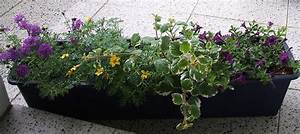 Winterpflanzen Für Balkonkästen : balkonkasten winterhart bepflanzen raum und m beldesign inspiration ~ Indierocktalk.com Haus und Dekorationen