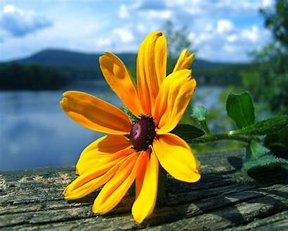 Wallpapers Desktop Flowers Flower Yellow Posted