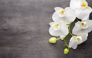 Download Wallpapers White Orchids, Tropical Flowers ...