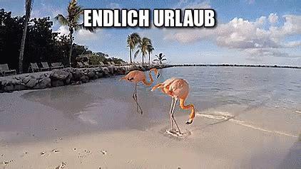 flamingo urlaub gif flamingo urlaub ferien discover