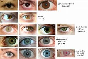 The Eye Color Chart | Eye color chart, Human eye and Eye ...