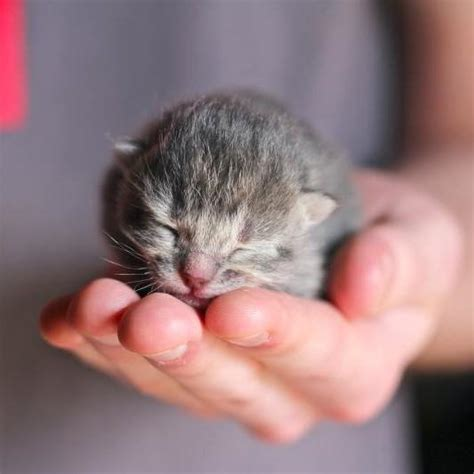 Can You Shower A Cat - can you give newborn kittens a bath