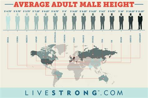 What Is The Average Adult Male Height And Weight