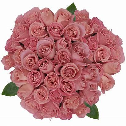 Hermosa Pink Roses Antique Prices Globalrose Lowest