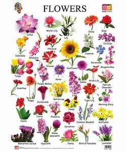 Best 25+ Names of flowers ideas on Pinterest | White ...