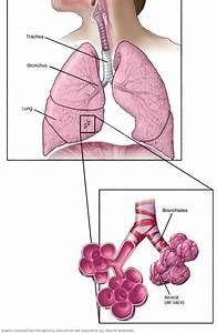 Pneumonitis Disease Reference Guide