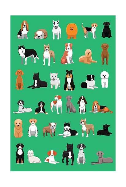Pitbull Dog Vector Cartoon Illustration Breeds Various