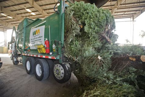 waste management christmas trees tree recycling in orange county cities orange county register