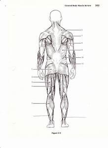 Blank Human Body Diagram   Blank Human Body Diagram 41