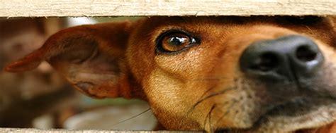 animal shelter animal shelters   animalshelternet