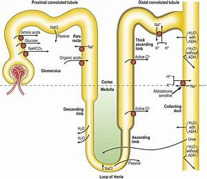 12  Nephrology