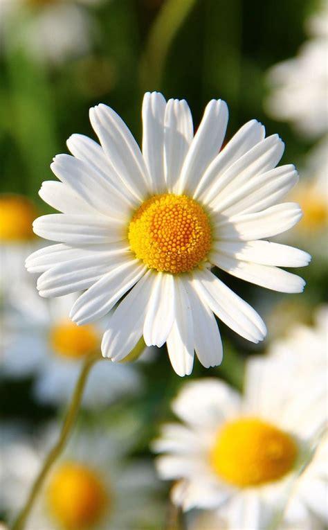 Best 25 Flowers Ideas On Pinterest Pretty Flowers
