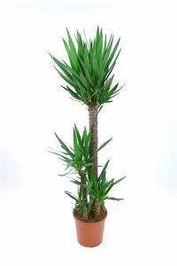 Plante D Intérieur Haute : plante d 39 int rieur laquelle choisir quand on n 39 a pas la ~ Dode.kayakingforconservation.com Idées de Décoration