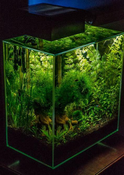 fluval aquascape fluval edge aquascaping aquarium aquarium aquarium