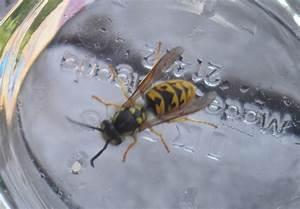 Welche Pflanzen Gegen Wespen : welche pflanzen helfen gegen insektenstichen eine welt ~ Lizthompson.info Haus und Dekorationen