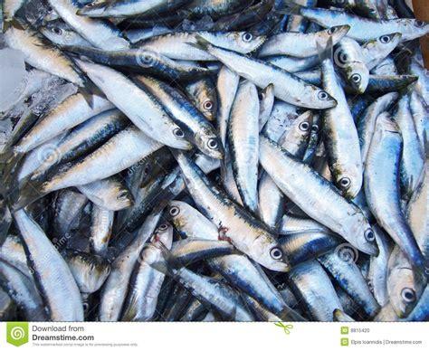 cuisiner des filets de sardines fraiches pile des sardines photo stock image 8815420