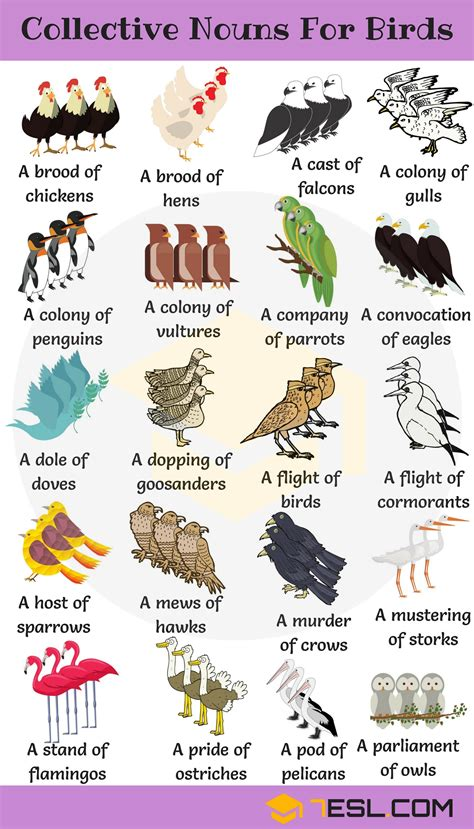 Animal Group Names: 250+ Collective Nouns for Animals