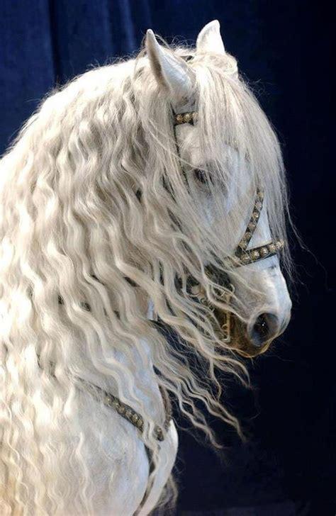 caballos vol  fotos imagenes  carteles