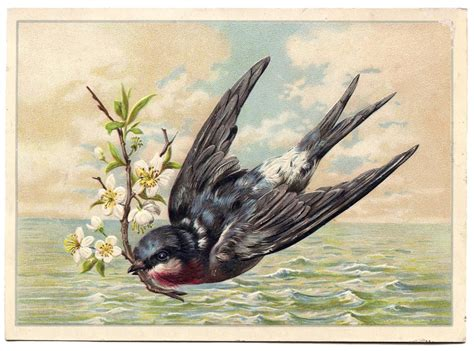 swallow vintage images  graphics fairy