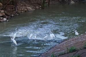 Permanent Rivers  U0026 Streams