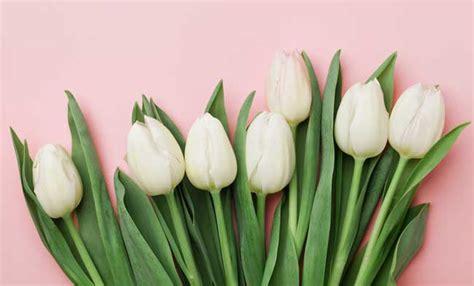 regalare fiori significato significato dei fiori da regalare a san valentino leitv