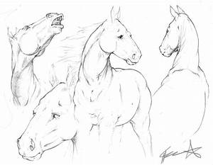 Horse sketches by ChuuStar on DeviantArt