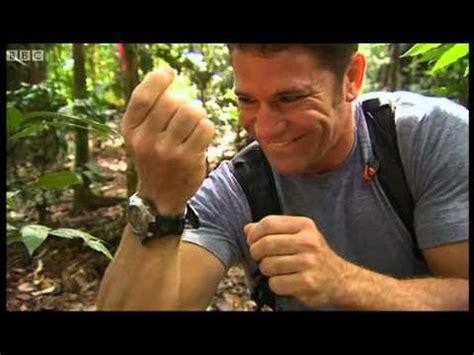 lethal encounter  killer centipede deadly  bbc