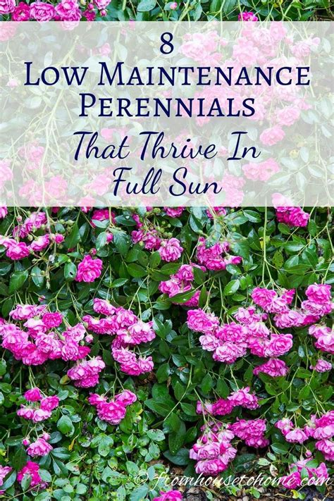 perennial border plants for sun 25 best ideas about full sun plants on pinterest full sun flowers sun plants and full sun garden