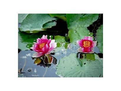 Flores Paisajes Agua Paisaje Animados Animado Imagenes