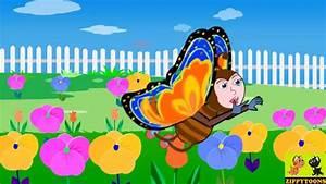 Butterly  Butterfly