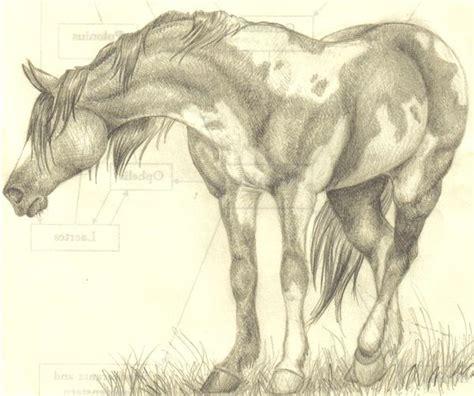 horse doodle deviantart english horses coloring arabian running tack pages donkeys doodles