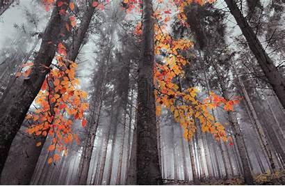 Orange Trees Nature Landscape Forest Fall Mist