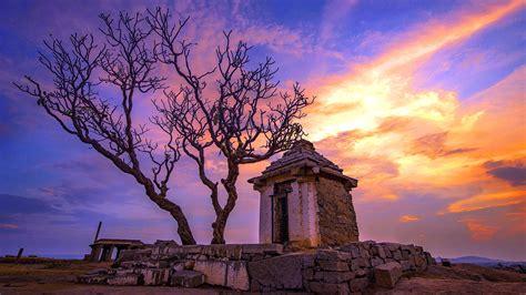 lone dry tree   ancient ruin hd wallpaper wallpaper