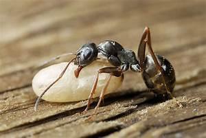 Was Mögen Ameisen Nicht : makro naturfoto insektenmakro makrofotografie mikrofotografie makro naturfotografie ~ Orissabook.com Haus und Dekorationen