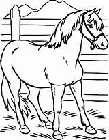 Horse Coloring Pages Printable Preschool Print Ausmalbilder Horses Pferde Kindergarten Stallion Zum Ausdrucken Heifer Colouring Preschoolcrafts Kinder Malvorlagen Ausmalen Bilder sketch template