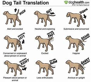 dog tail wagging signs main qimg ...